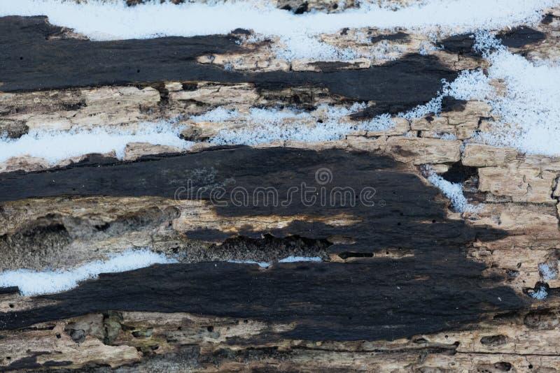 Baumrinde mit Schnee stockfotos