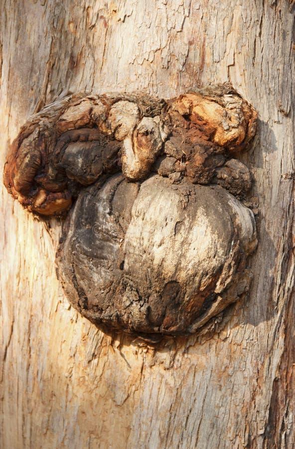 Baumrinde, raue Textur und Hintergrund Einzigartige Mängel an der Rinde eines Baumes, eine einzigartige Art von Risslinien stockbild