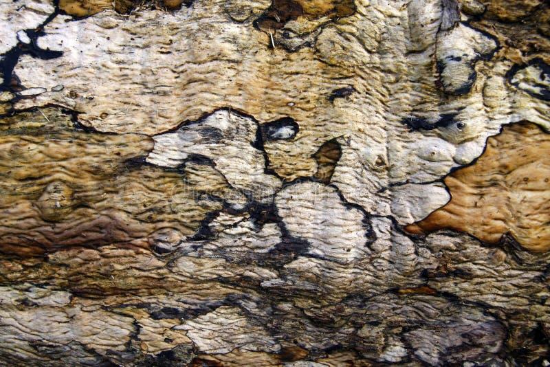 Baumrindemuster und -beschaffenheit lizenzfreie stockbilder