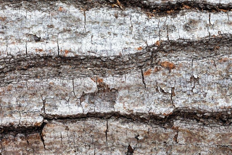 Baumrindenahaufnahme lizenzfreies stockbild