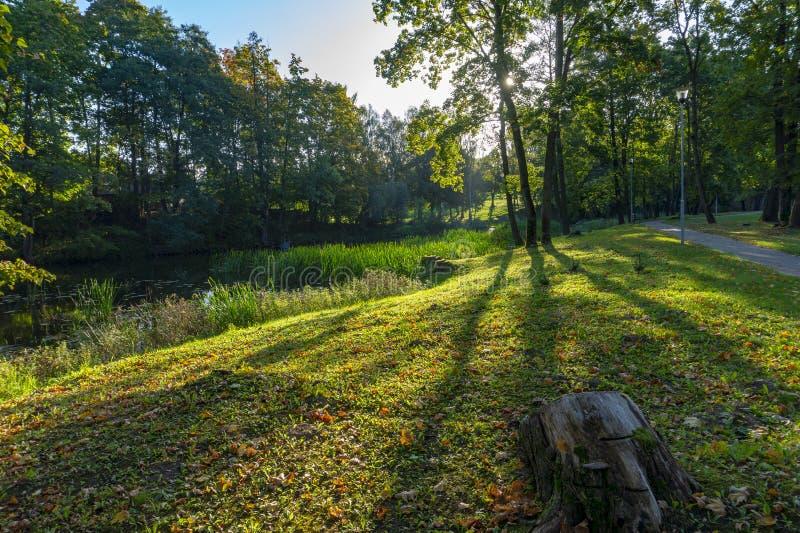 Baumschatten auf grünem Gras mit Herbstlaub stockfotografie