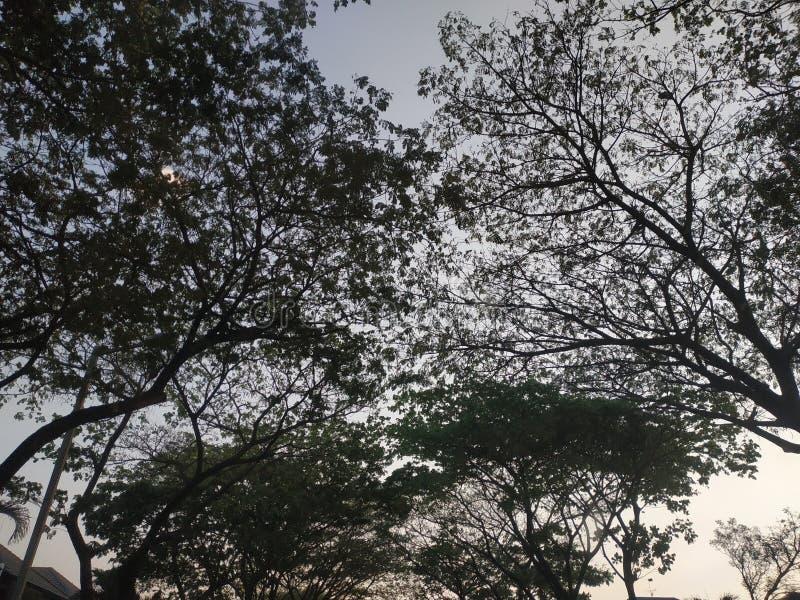Baumschatten, der königliche leere Asphaltstraße Wohnsitzsurabayas Osttimor Indonesien bewegt lizenzfreie stockfotografie