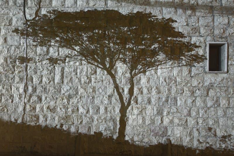 Baumschatten in Schwarzweiss