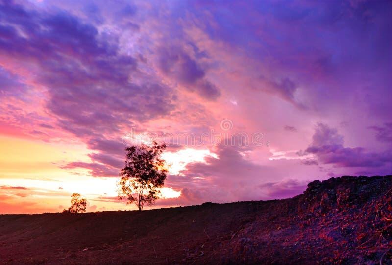 Baumschattenbild auf purpurroter Wolke lizenzfreies stockbild