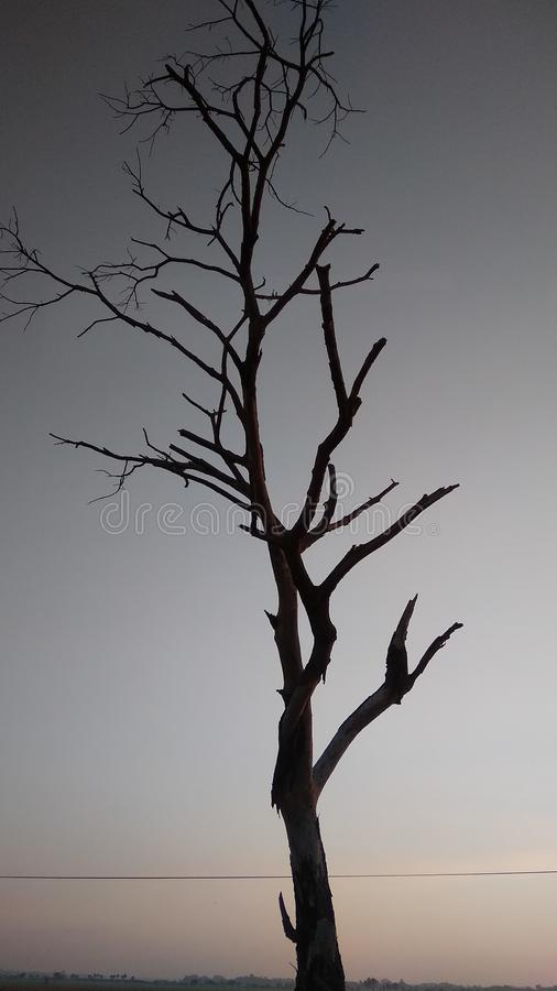 Baumschattenbild, das an der Dämmerung trocken ist stockfoto
