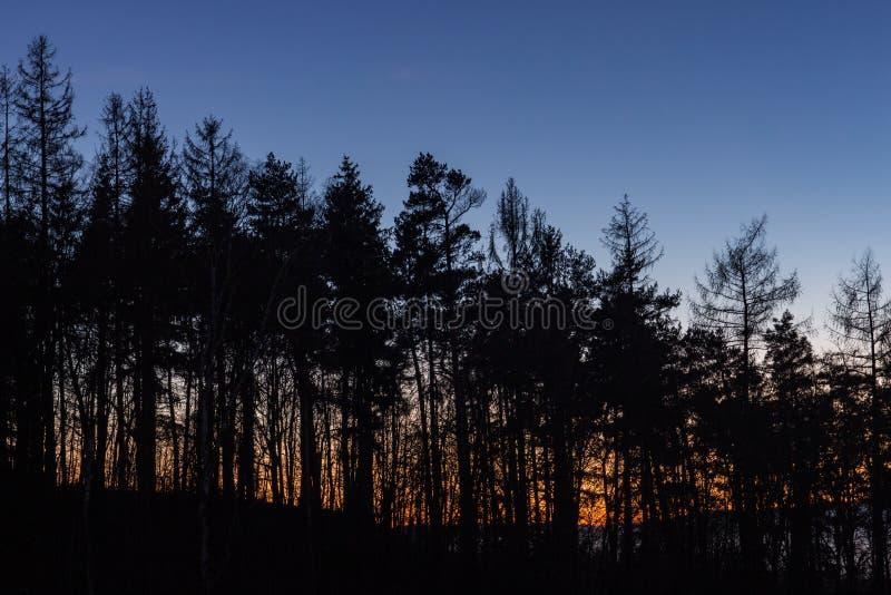 Baumschattenbilder mit dem Sonnenuntergang im Hintergrund stockfotos