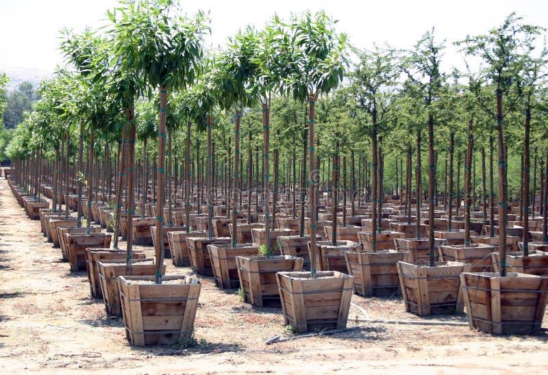 Download Baumschule stockfoto. Bild von wachsen, grow, gardening - 25776