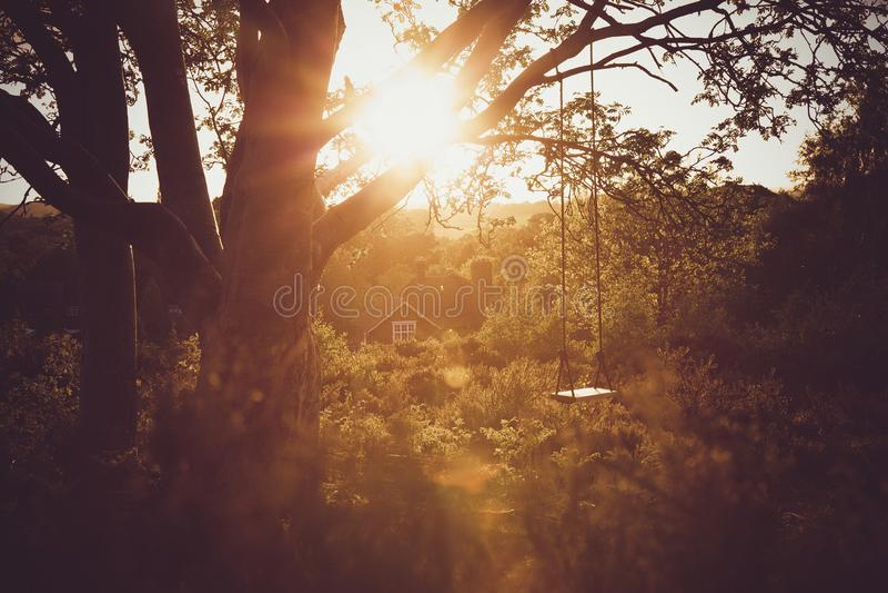 Baumschwingen bei Sonnenuntergang 2 lizenzfreie stockbilder