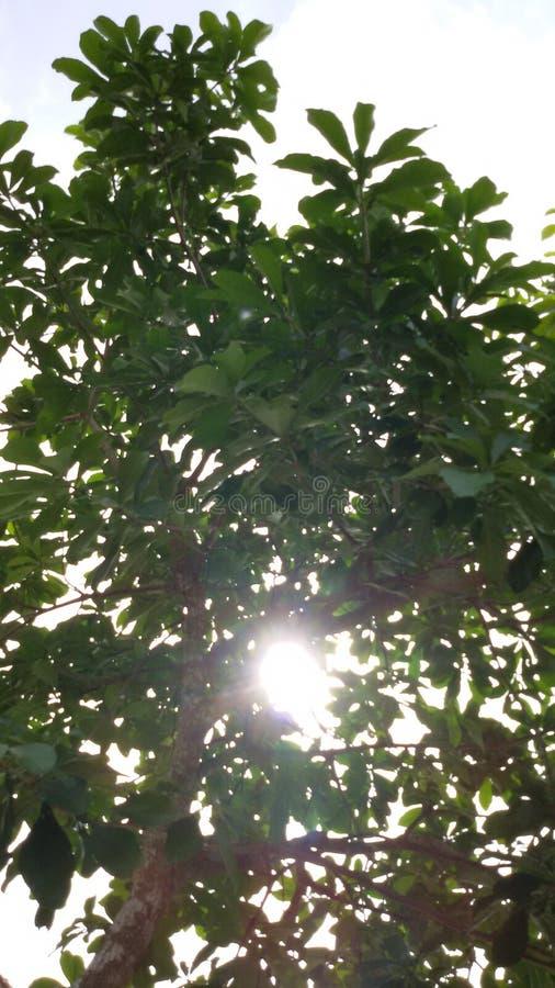 Baumsonnenlicht stockfoto