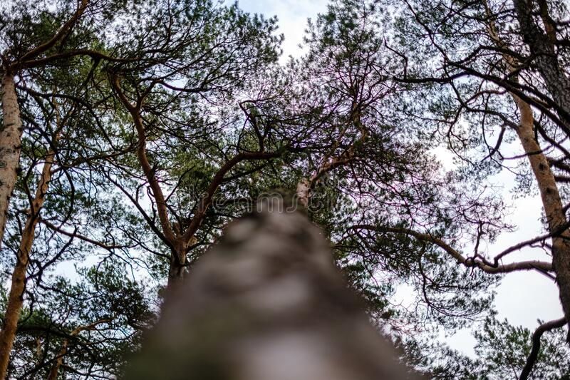 Baumstämme im Herbst ohne Blätter und flache Feldtiefe gegen den Himmel stockfotos