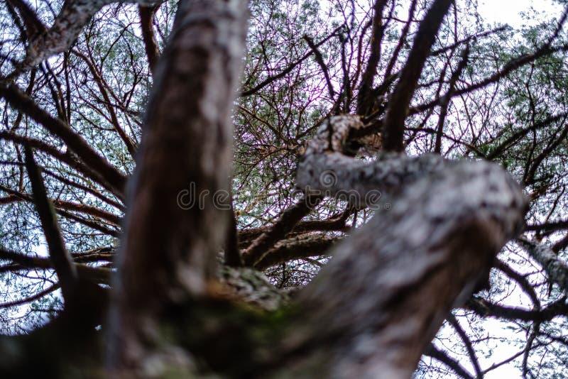 Baumstämme im Herbst ohne Blätter und flache Feldtiefe gegen den Himmel lizenzfreie stockfotografie