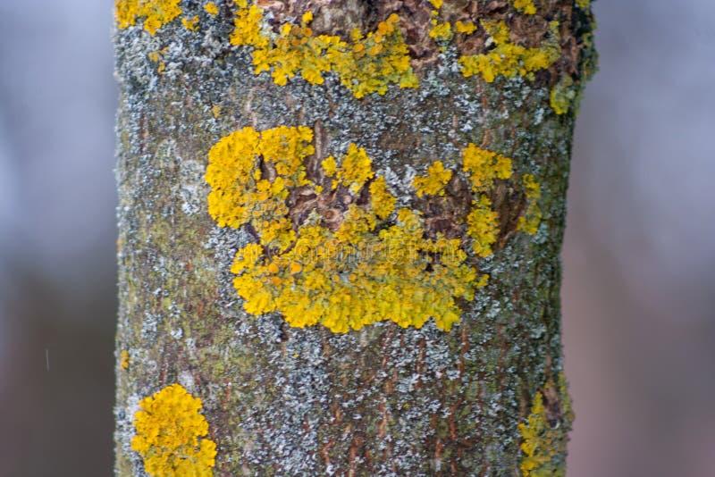 Baumstamm bedeckt mit gelber Flechte und Pilz stockbild