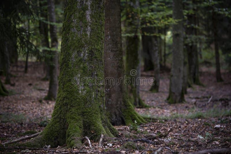 Baumstamm bedeckt mit grünem Moos lizenzfreie stockfotografie