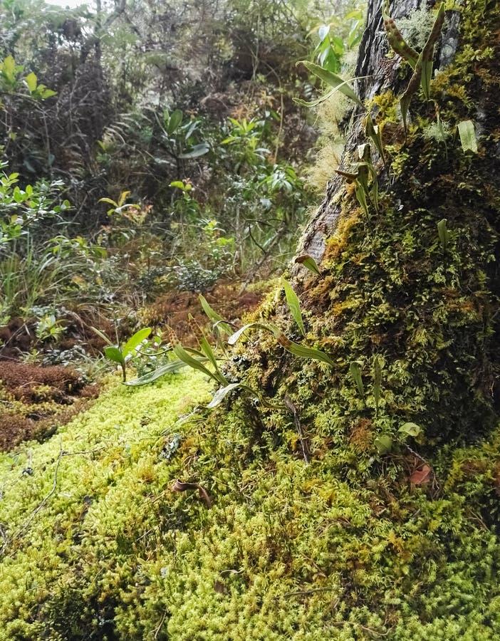 Baumstamm in einem Dschungel bedeckt mit einer Schicht Moos und organischem pflanzlichem Material lizenzfreies stockbild