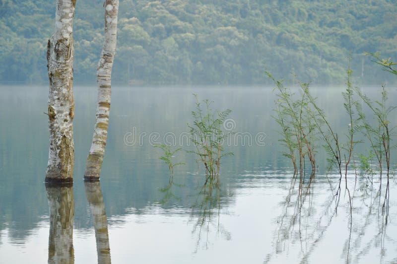 Baumstamm und -reflexion auf Wasser tauchen in See auf lizenzfreie stockfotos
