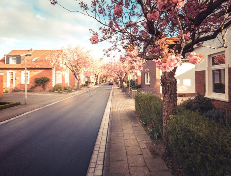 Baumstrasse在诺登 免版税库存图片