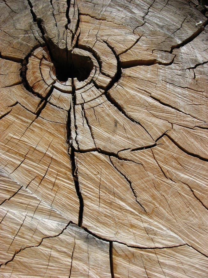 Baumstumpf stockfotos