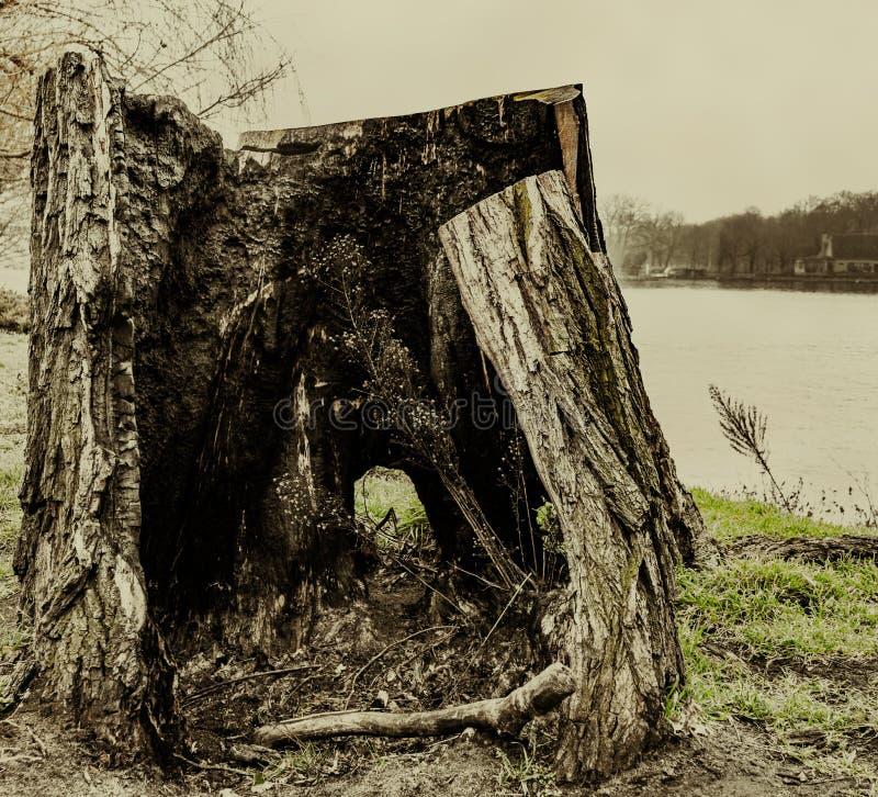 Baumstumpf lizenzfreie stockfotografie