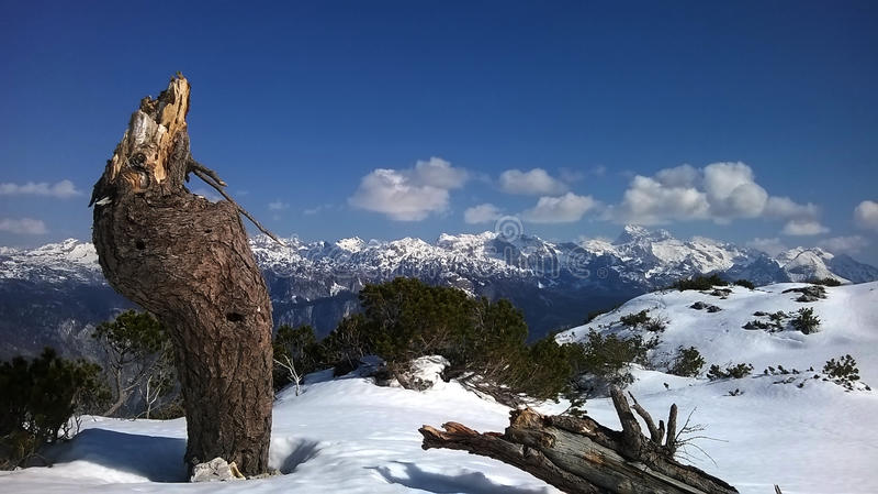 Baumstumpf auf dem Vogel Ski Slopes stockfoto