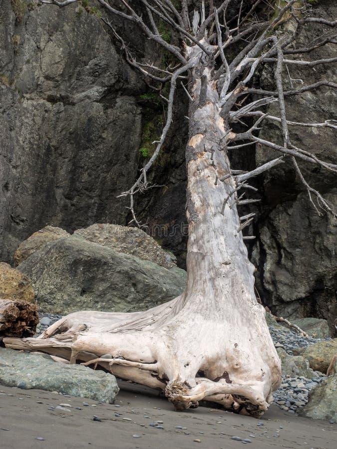 Baumstumpf auf Ozeanstrand stockfotos