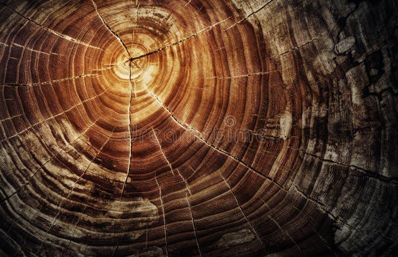 Baumstumpf - Eichenstamm mit Jahresringen stockfotos