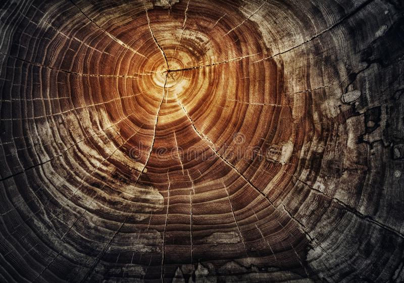 Baumstumpf - Eichenstamm mit Jahresringen Schnittholz stockfotos