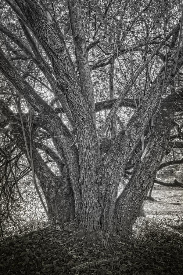 Baumstumpf im Schatten lizenzfreie stockfotos