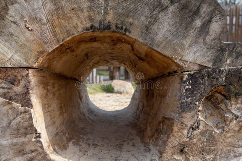 Baumstumpf mit Lochinnere stockfotografie