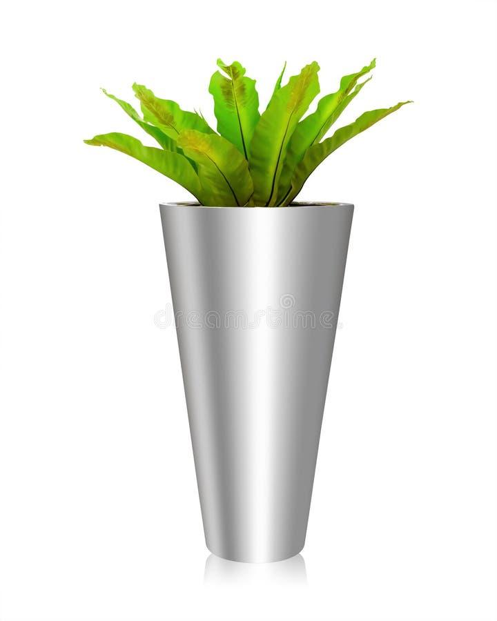 Baumtöpfe lokalisiert auf weißem Hintergrund Farnvasendekoration für Büro oder Zimmerpflanze Über Weiß stockfoto