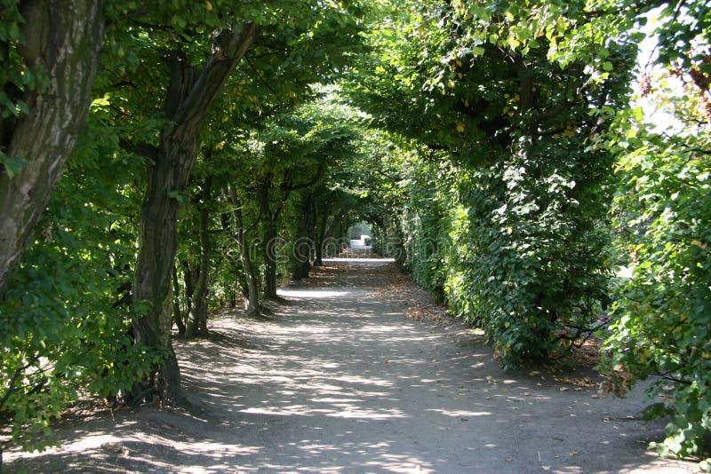 Baumtunnel, Kromeriz