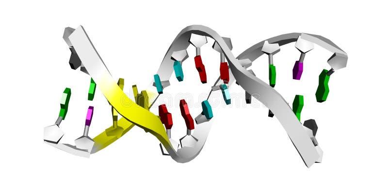 Baumuster 3D von DNA lizenzfreie abbildung