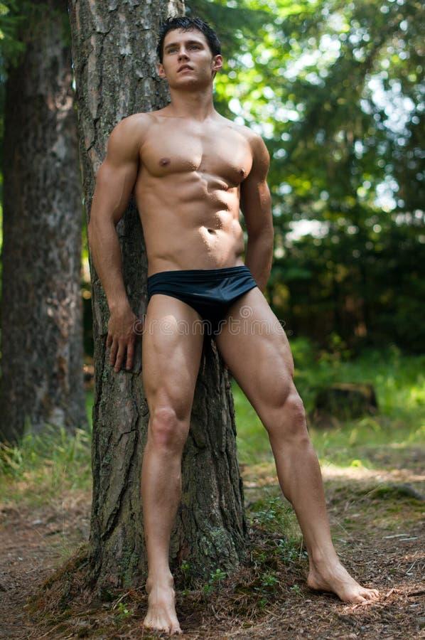 Baumuster im Wald stockfotos