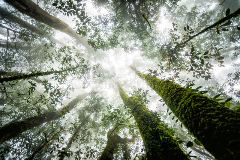 Baumwald in der Herbstsaison von Thailand stockfotografie