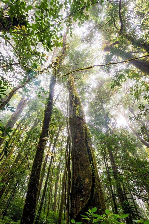 Baumwald in der Herbstsaison von Thailand stockbilder