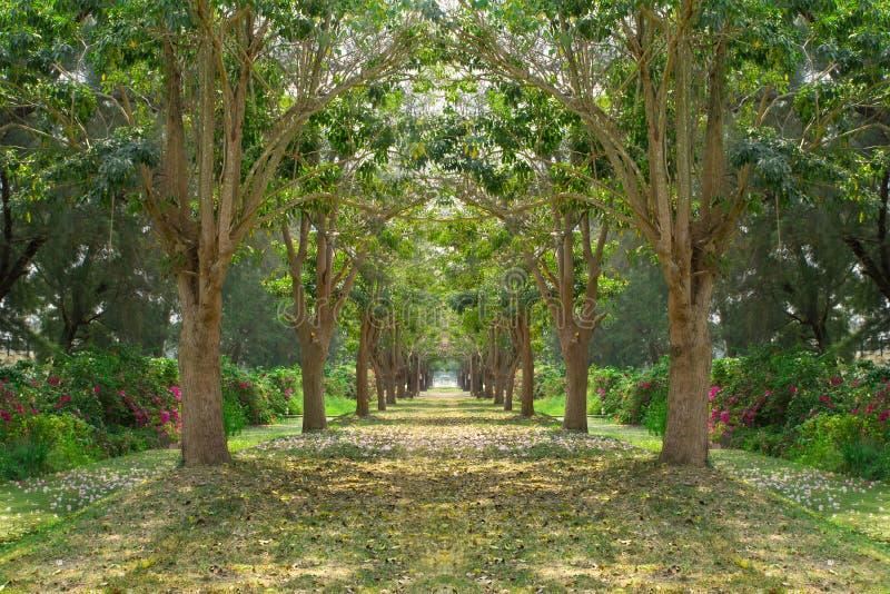 Baumweise stockfotos