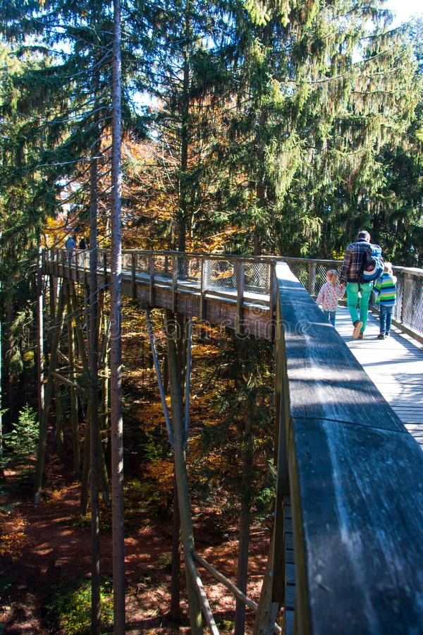 Bavarian Forest royalty free stock images
