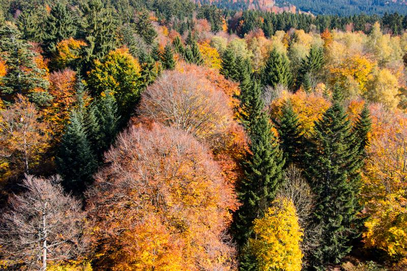 Bavarian Forest royalty free stock photos