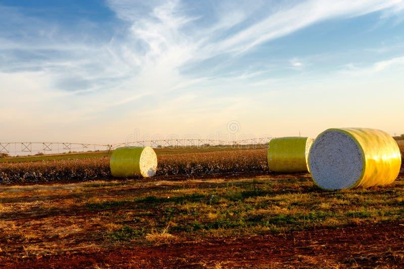 Baumwollballen auf einem geernteten Land stockfoto