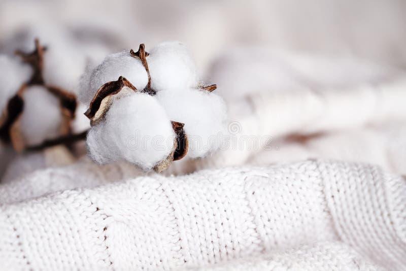Baumwollblumen und Knit-Decke stockfoto