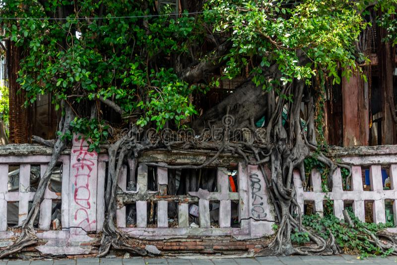 Baumwurzeln Bangkok Thailand stockfotos