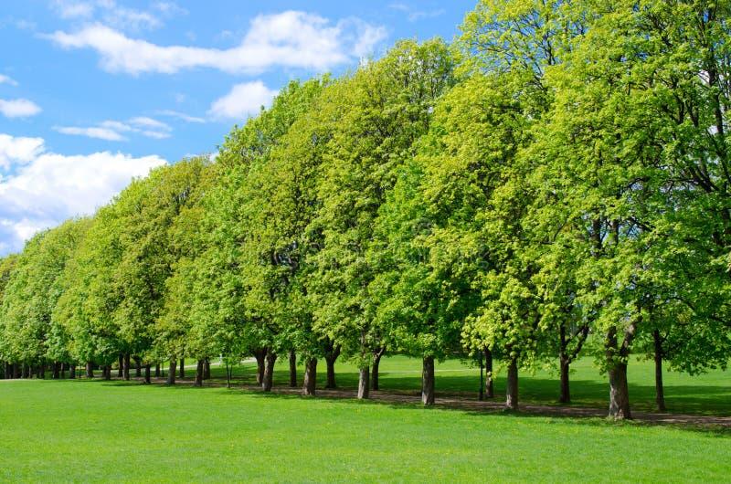 Baumzeile im populären Vigeland Park lizenzfreie stockfotos