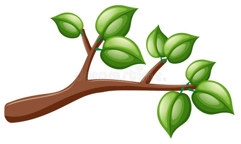 Baumzweig mit grünen Blättern vektor abbildung