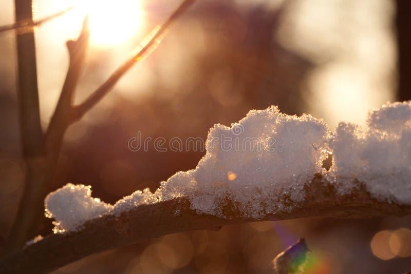 Baumzweig mit Schnee und Eis stockbilder