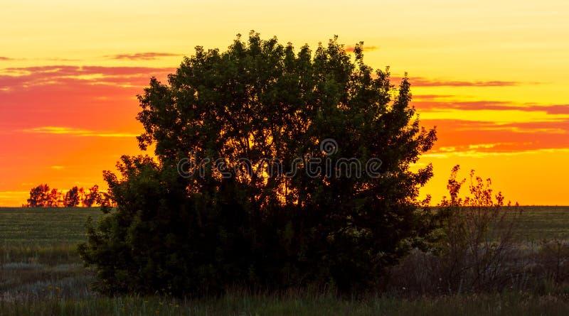 Baumzweige Silhouette auf Sonnenuntergang lizenzfreie stockfotografie