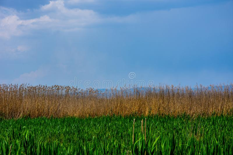 The bautiful meadow with reeds on the Eber lake. Located in Afyon province in Turkey royalty free stock photo