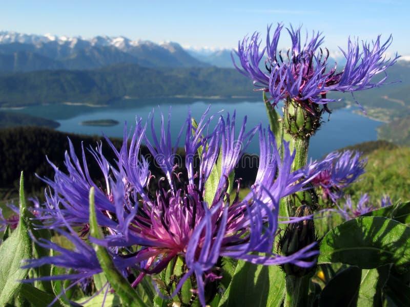 Download Bavarian Alps: Jochberg Stock Photography - Image: 28960662