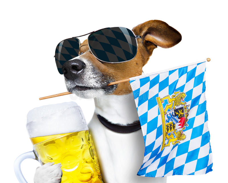 Bavarian beer dog festival. Jack russell dog celebrating beer festival in munich , bavaria germany holding flag in mouth , and beer mug , isolated on white stock image