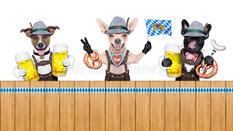 Bavarian beer dogs row. Bavarian german row or group of dogs with pretzel, beer mug ,flag , sausage, and gingerbread heart, isolated on white background , ready stock images