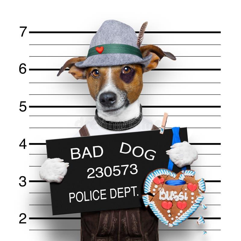 Bavarian beer mugshot dog stock photo