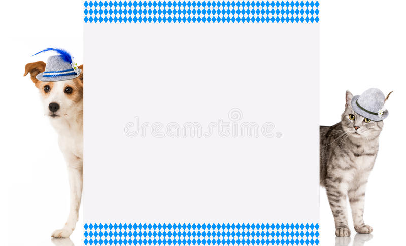 Bavarian cat and dog royalty free stock images